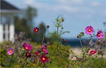 Hospice, lila blomster
